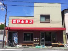 吉野金魚店