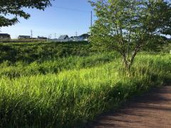 リバーランド沖館緑地