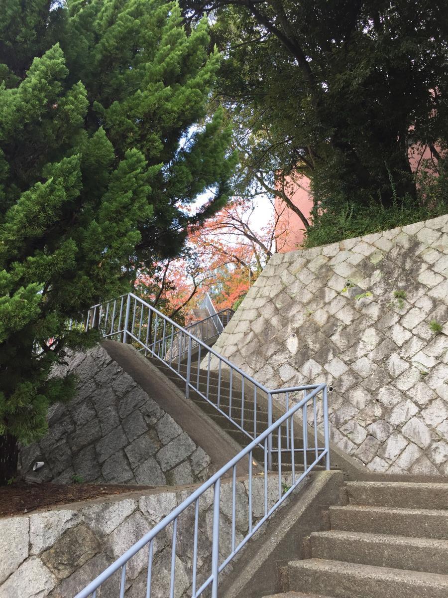 自然がいっぱいの階段