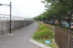 中川右岸緑道公園