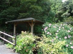 県立笠森鶴舞自然公園