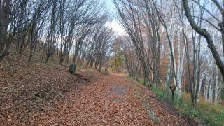 啄木詩の道