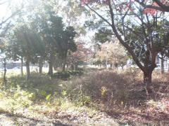 浜田1号緑地