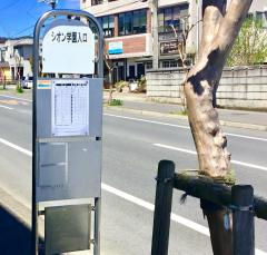 「シオン学園入口」バス停留所