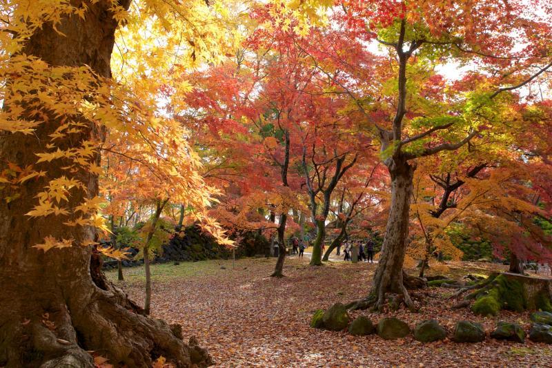 紅葉が美しい秋の懐古園