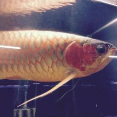 アクアハウスボビーズ_動物・魚(ペット)